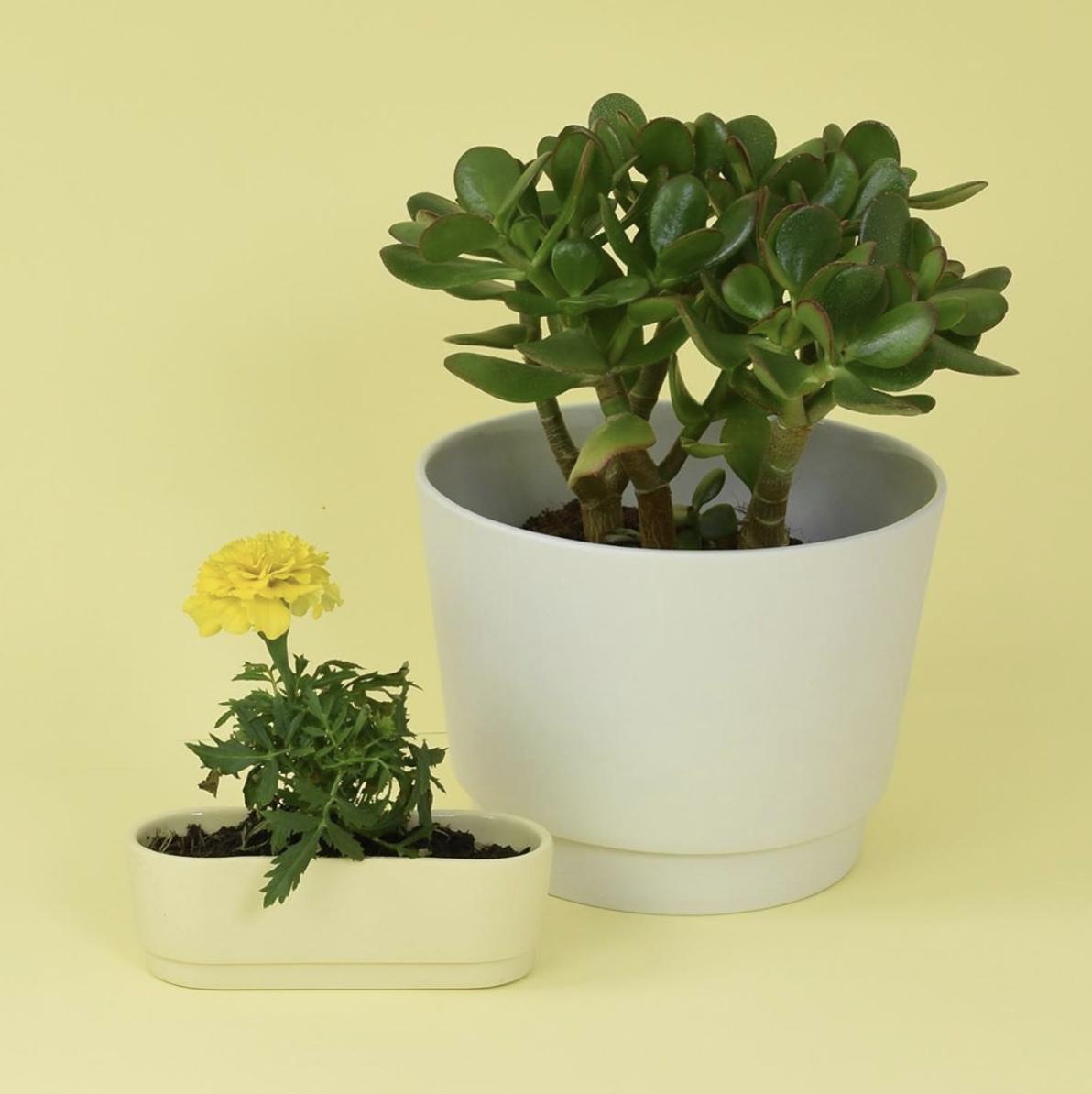 Cache-pot en porcelaine - intérieur émaillé (XL) * Studio Harm en Elke